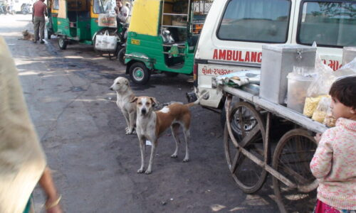 community dogs Chippavad